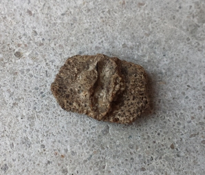 Unidentified scute - Turtle?