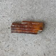 Pleistocene Giant Beaver tooth fragment (still orange!)