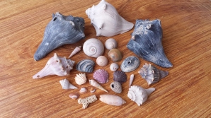 Some pretty shells that I found overnight!
